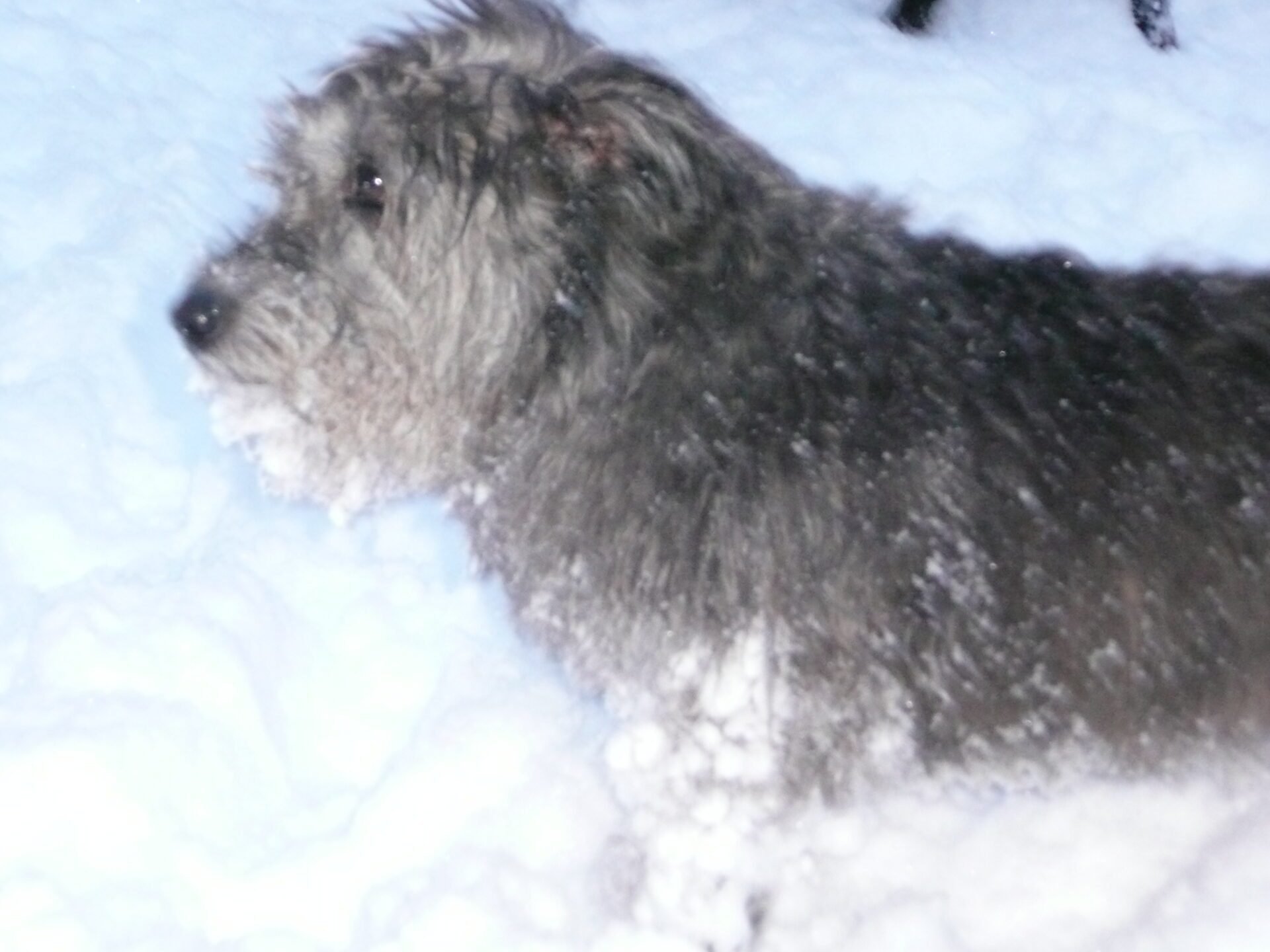 Hideous winter affliction attacks dogs. | Alison\'s Diary