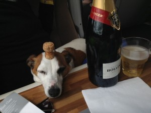 Izzy - the perfect travelling companion